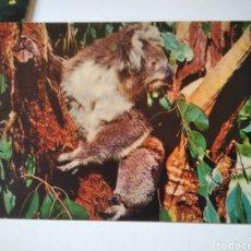 Postales: POSTAL KOALA AUSTRALIA. Lote 215537648