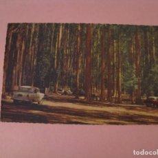 Postales: POSTAL DE SHERBROOKE FOREST, THE DANDENONGS, VICTORIA. AUSTRALIA. VALENTINE'S CARD.. Lote 232577170