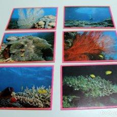Postales: POSTALES TEMATICAS -CORALES- LOTE DE 6 ,NUEVAS AÑOS 60 / 70. Lote 247546015