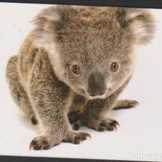 Postales: POSTAL SIN CIRCULAR ESCRITA KOALA ANIMAL FAUNA AUSTRALIA POST CARD. Lote 251074415