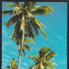 Postales: ISLAS FIJI. *CLIMBING A COCONUT TREE...* CIRCULADA 1976.. Lote 272235498
