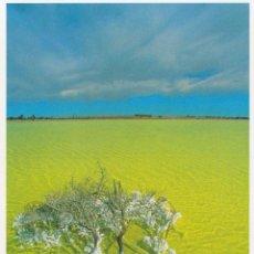 Postales: LE MONDE VIVANT - LAC SALÉ ET ARBRE MORT AUSTRALIE - WWF Nº178 - S/C - (17X12). Lote 290054683