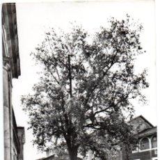 Postales: PS7078 GUERNICA 'ÁRBOL DE GUERNICA'. POSTAL MADRID. CIRCULADA. 1961. Lote 68033437