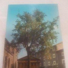 Postales: ANTIGUA POSTAL DE GUERNICA (VIZCAYA) ARBOL SIMBOLICO . EDICIONES S. CAYETANO 7828.. Lote 149715778