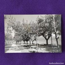 Postais: POSTAL DE LAGUARDIA (ALAVA). Nº33 VISTA PARCIAL DE EL PASEO DE EL COLLADO. 1959.. Lote 205553631