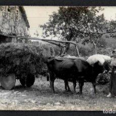 Postales: POSTAL FOTOGRAFICA DE DURANGO - AGRICULTORA Y CARRO CON VACAS - 1910-20.. Lote 215244223