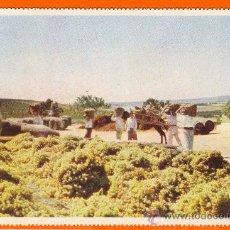 Postales: GONZALEZ BYASS. AÑOS 50. SIN CIRCULAR. EL SOLEADO DE LA UVA EN LA VIÑA ANTES DE SER PISADA.. Lote 26485083