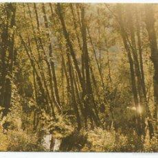 Postales: POSTAL FARMACEUTICA *CORTADELTIN ASMA* - LABORATORIOS AMOR GIL 1961. Lote 57431201