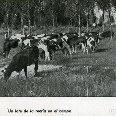 Postales: ARANDA DE DUERO (BURGOS). LECHES 'VENTOSILLA'. EXPLOTACIÓN AGRÍCOLA Y GANADERA. DÉCADA DE 1930.. Lote 122927175