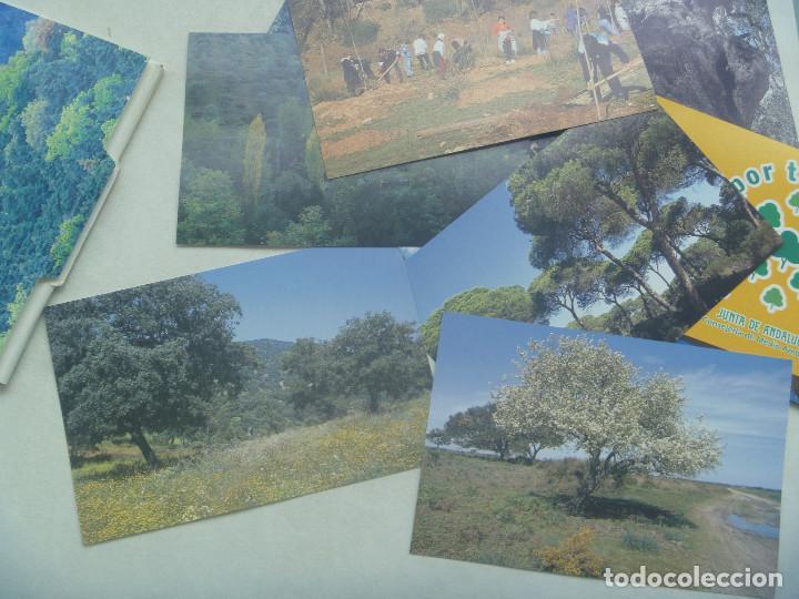 Postales: COLECCION 18 POSTALES PUBLICITARIA JUNTA DE ANDALUCIA: COMPROMISO POR LOS BOSQUES, MIRA POR TUS BOSQ - Foto 2 - 160636810