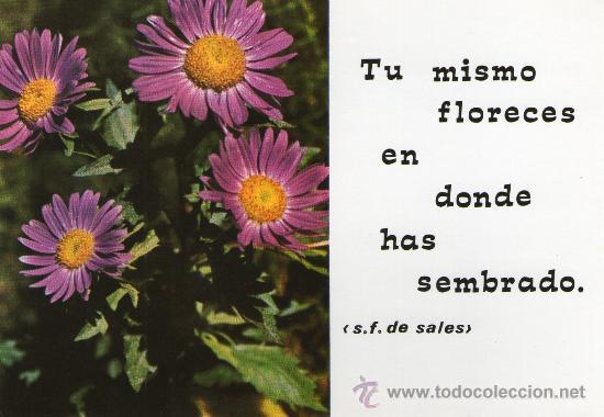 Postal Religiosa De Flores Con Bonito Mensaje Kaufen Alte