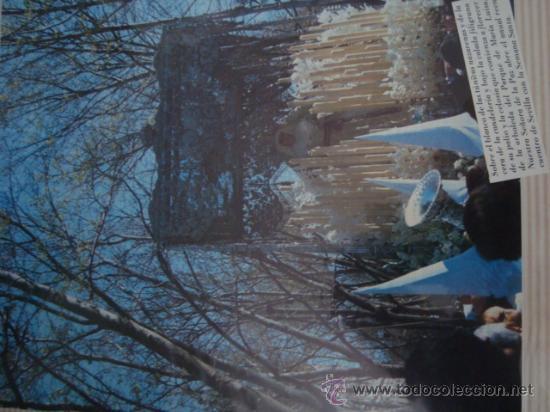 Postales: magnifico y curioso album de coleccionista de la ciudad de sevilla ysu semana santa , virgen cristo - Foto 19 - 29942249