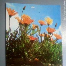 Postales: POSTAL CON FRASE SCHULTZ AÑO 1979 SERIE ESPERANZA. Lote 107100514
