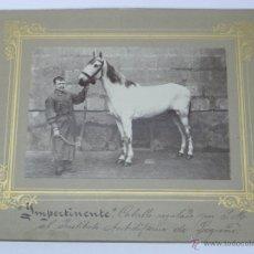 Postales: ANTIGUA FOTOGRAFIA ALBUMINA DE LOGROÑO (LA RIOJA), IMPERTINENETE, CABALLO REGALADO POR S. M. AL INST. Lote 38287002