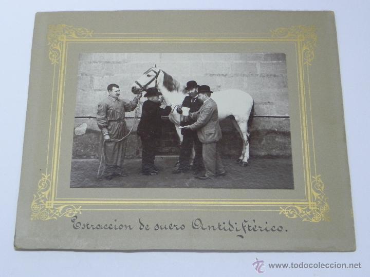 ANTIGUA FOTOGRAFIA ALBUMINA DE LOGROÑO (LA RIOJA), IMPERTINENETE, CABALLO REGALADO POR S. M. AL INST (Postales - España - La Rioja Antigua (hasta 1939))