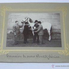 Postales: ANTIGUA FOTOGRAFIA ALBUMINA DE LOGROÑO (LA RIOJA), IMPERTINENETE, CABALLO REGALADO POR S. M. AL INST. Lote 38287003