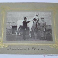 Postales: ANTIGUA FOTOGRAFIA ALBUMINA DE LOGROÑO (LA RIOJA), IMPERTINENETE, CABALLO REGALADO POR S. M. AL INST. Lote 38287005