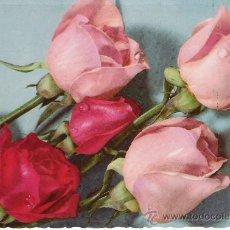 Postales: 5 ROSAS - C. Y Z. 6123 - . Lote 16747961