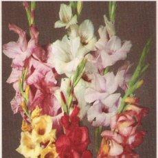 Postales: GLADIOLI - VALENTINE & SONS - FLOWER SERIES Nº 23 -. Lote 16748782