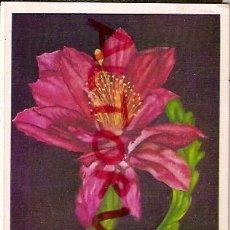 Postales: POSTAL A COLOR Nº 612 FLOR DEL CALCIO EDITORIAL ARTIS MUNI. Lote 19121518