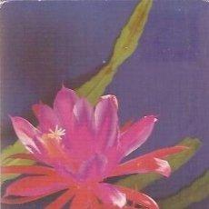 Postales: POST CARD CACTUS ESCRITA 1985. Lote 37182488