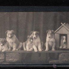 Postales: POSTAL DE 1916. 6 PERRITOS . Lote 43112175