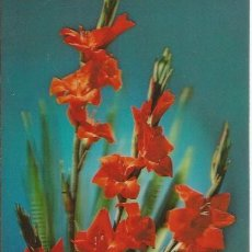Cartes Postales: +-+ PV355 - POSTAL ANIMADA - RAMO DE FLORES. Lote 43950880