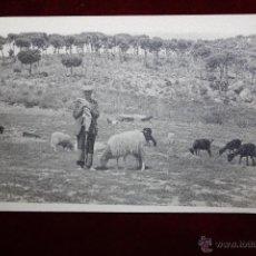 Postales: ANTIGUA FOTO POSTAL DE LOS AÑOS 50-60. PERSONAJE TIPICO. PASTOR CON REBAÑO. SIN CIRCULAR. Lote 47601959