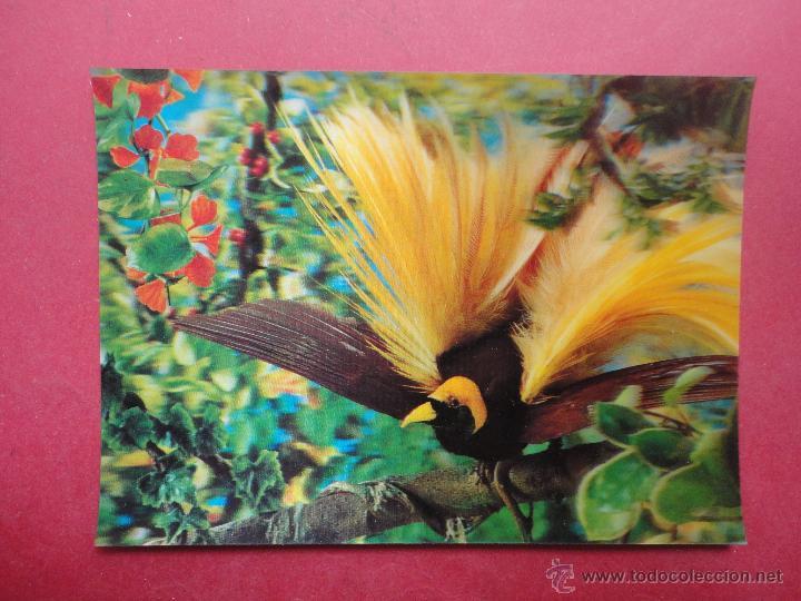 POSTAL 3D. STUDIO AG. A BIRD OF PARADISE. ESTEREOSCÓPICA (Postales - Varios)