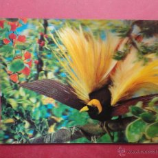 Cartoline: POSTAL 3D. STUDIO AG. A BIRD OF PARADISE. ESTEREOSCÓPICA. Lote 50725155