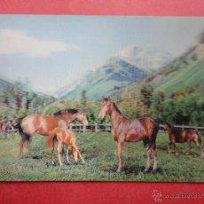Cartoline: POSTAL 3D. TOPPAN. CABALLOS. ESTEREOSCÓPICA. Lote 50725466