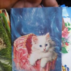 Cartoline: POSTAL - GATO. Lote 77256681