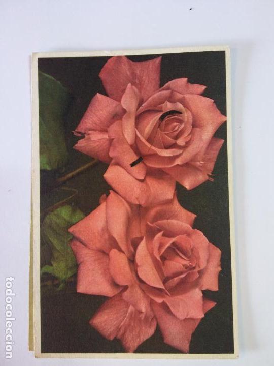 Bjsflores Rosas Rojasescritastablen23 Roses Buy Other Old