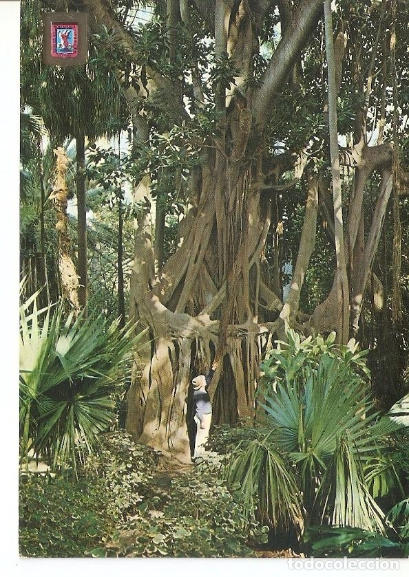 Postal 033254 : La Orotava (Tenerife). Arbol del caucho (Coussapoa  Dealbata) en el Jardin Botanico