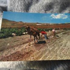 Postales: POSTAL ISLAS CANARIAS. Lote 145477188
