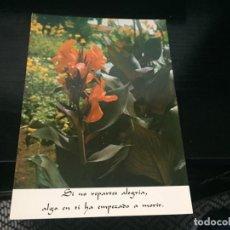 Postales: POSTAL DE FLORES - LA DE LA FOTO VER TODAS MIS POSTALES. Lote 194275451