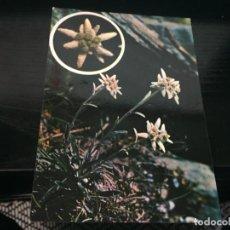 Postales: POSTAL DE FLORES - LA DE LA FOTO VER TODAS MIS POSTALES. Lote 194275556
