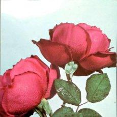 Postales: FLOR (113) ROSAS ROJAS. NUEVA. COLOR. VER FOTO. Lote 194300032