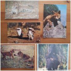 Postales: LOTE 5 POSTALES: LEÓN, ELEFANTE (SELLO KENYA), KOOKABURRA, ZORRO, LEOPARDO (SELLO SRI LANKA).. Lote 194544228