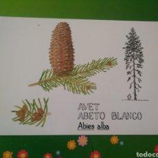 Postales: AVET ABETO BLANCO. ABIES ALBA. Lote 195637138