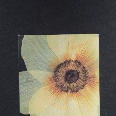 Postales: POSTAL GRANDE DE UNA FLOR ANEMONE HYBRIDA PARIS SIN CIRCULAR. Lote 254607400