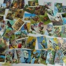 Cartoline: COLECCION LOTE DE 61 TARJETAS POSTALES DE ANIMALES. Lote 275796368