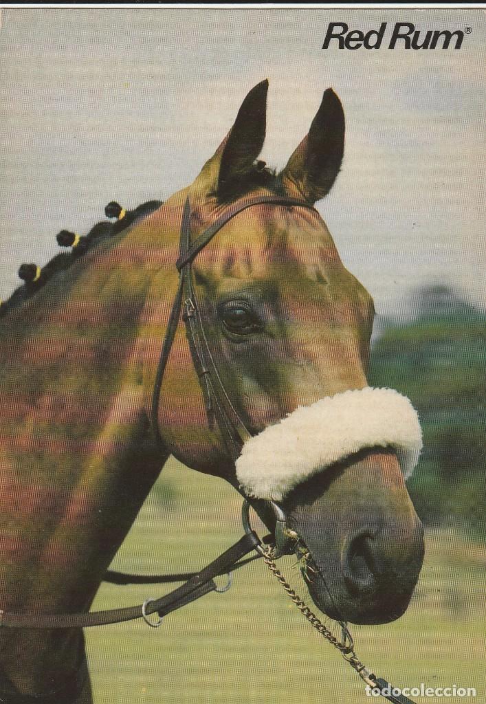 POSTAL - CABALLO - RED RUM - ED. SCANDECOR - SUECIA - AÑO 1982 - NUEVA (Postales - Varios)