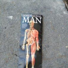 Coleccionismo de carteles: REPRODUCCIÓN CUERPO HUMANO A TAMAÑO NATURAL. Lote 124580919