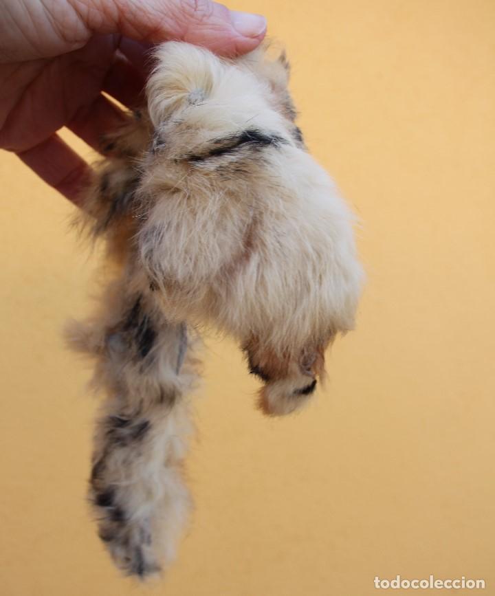 Reproducciones Muñecas Españolas: Boa de piel de conejo auténtico para Nancy / Leslie - Foto 7 - 156273818