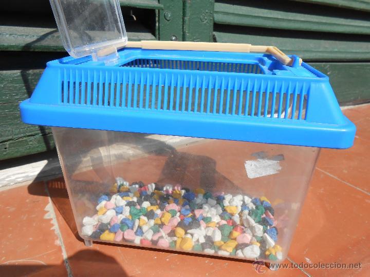 Acuario peque o para transportar peces tortuga comprar for Peces para acuarios pequenos