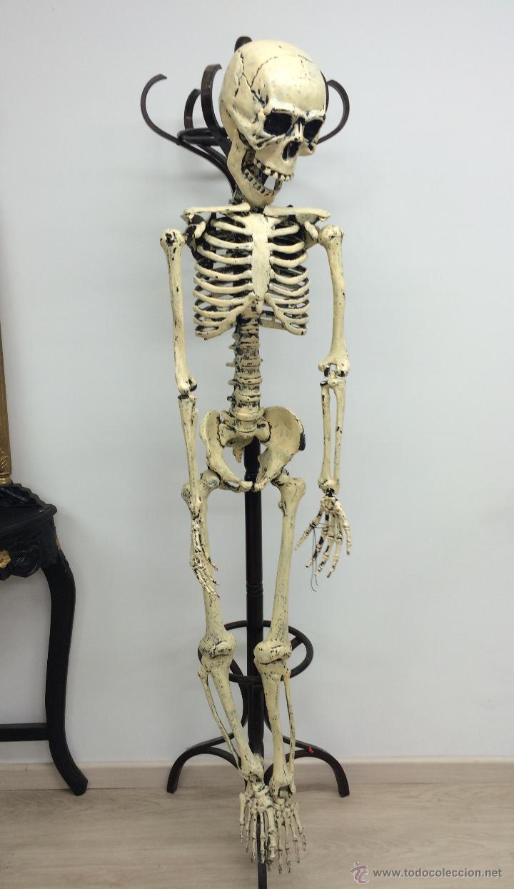 esqueleto de 160cm de altura ideal decoración, - Comprar artículos ...