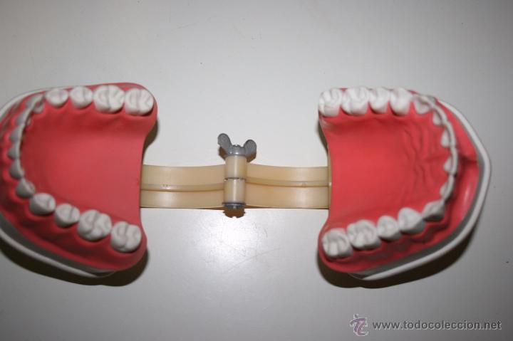 Segunda Mano: Colgate. Curiosa dentadura en pasta dura que la firma comercial regalaba a dentistas y farmacias. - Foto 3 - 51257116