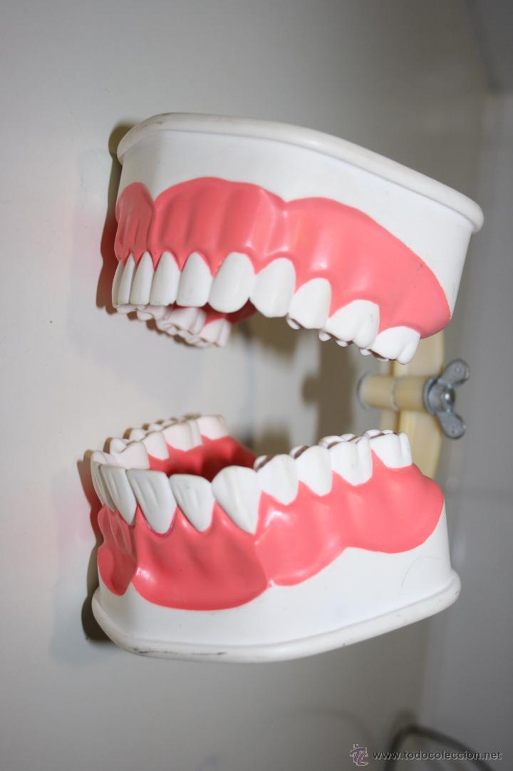 Segunda Mano: Colgate. Curiosa dentadura en pasta dura que la firma comercial regalaba a dentistas y farmacias. - Foto 4 - 51257116