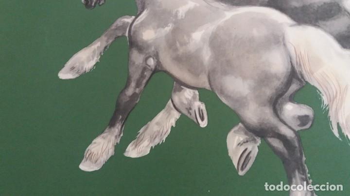 Segunda Mano: Laminas de caballos - Foto 2 - 177591279